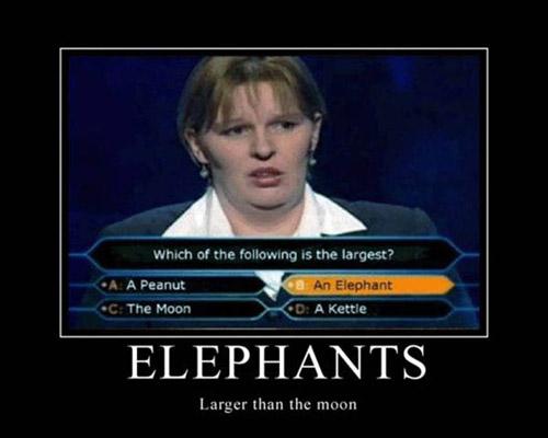 80-elephants[1].jpg